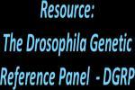DGRP logo